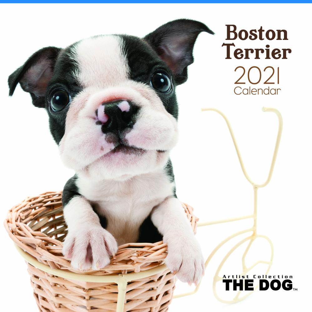 2021年 THE DOGカレンダー【大判サイズ】ボストン・テリア