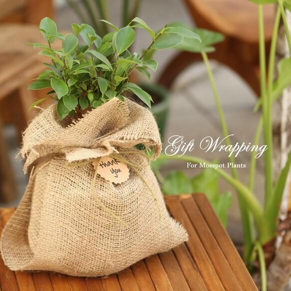 植物用 ギフトラッピング