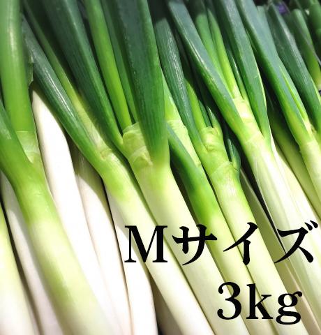 夏ねぎ Mサイズ 3kg 予約販売
