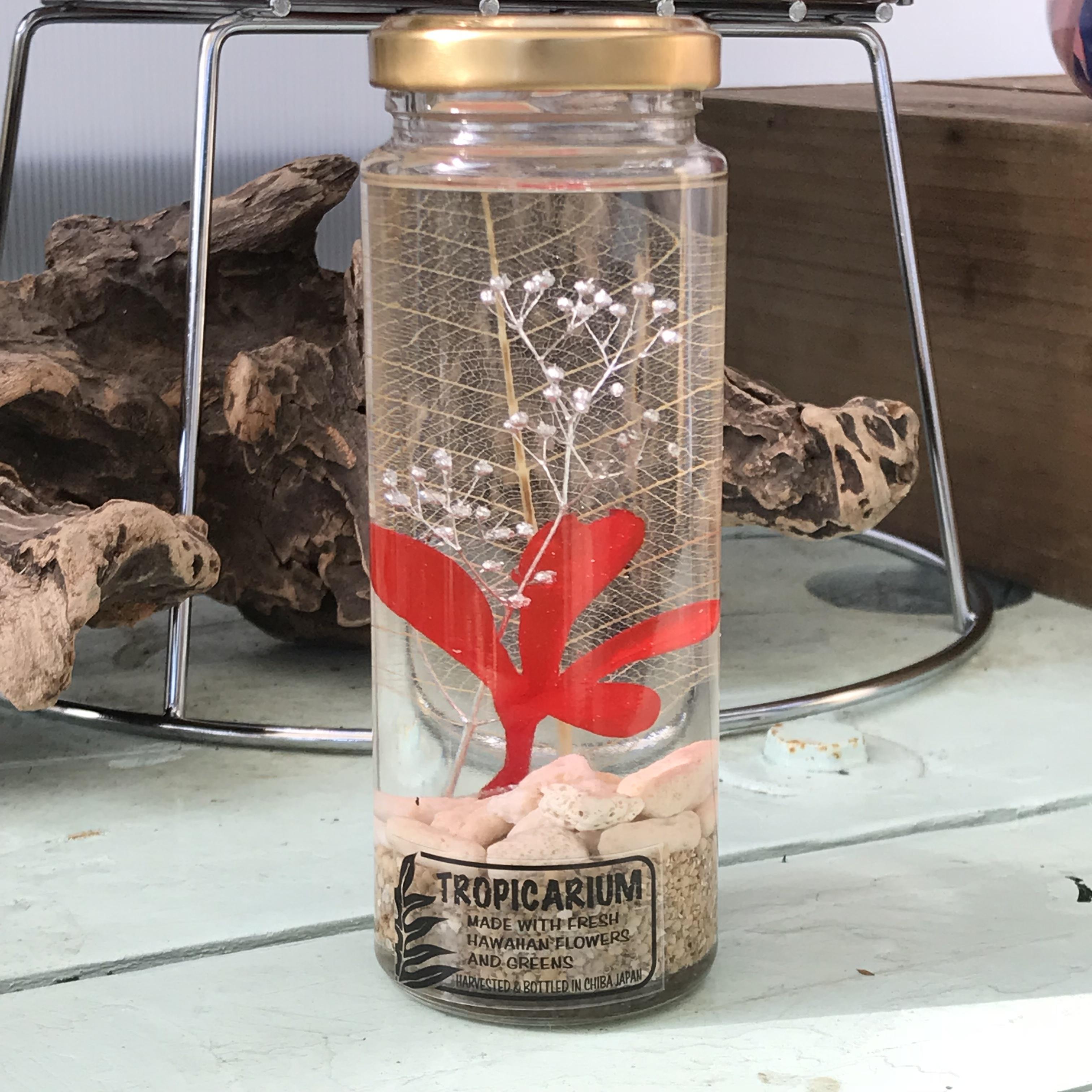 【ハワイアンなハーバリウム】プルメリアのトロピカリウム|レッド(スリムボトル・プリザーブド)