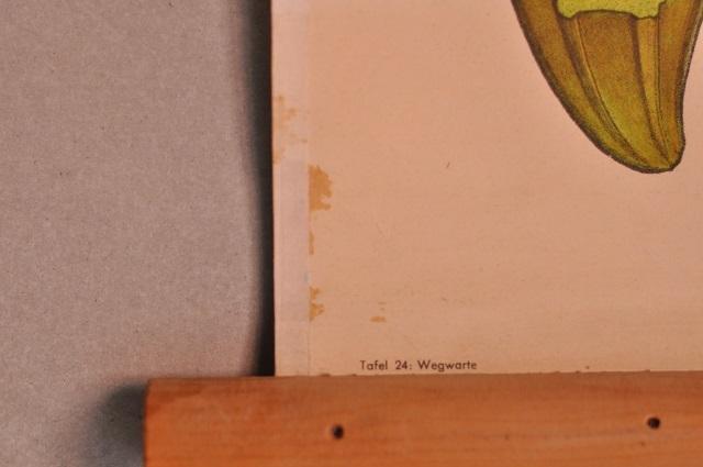 Chicory タペストリー