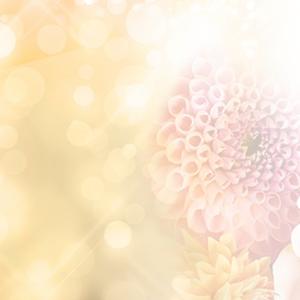 ブログヘッダー(アメブロ簡単カスタマイズ) -- flower03