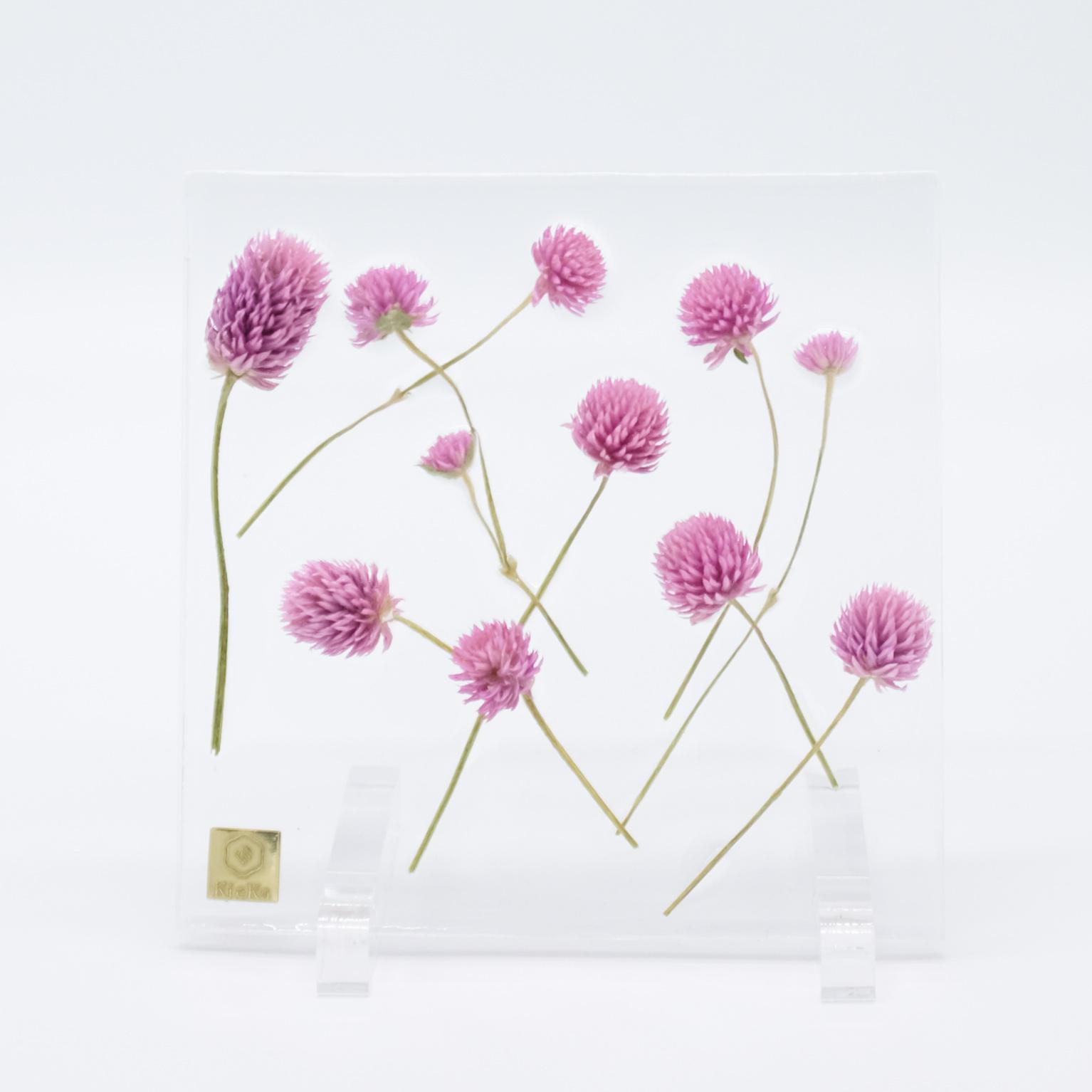 dried flower square センニチコウ