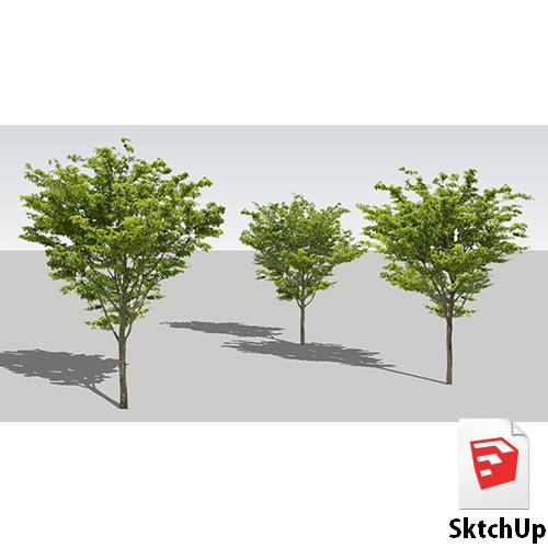 樹木SketchUp 4t_003 - 画像1