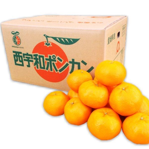 八協ポンカン10kg箱 優品2LまたはLサイズ 愛媛西宇和産★送料無料 - 画像1