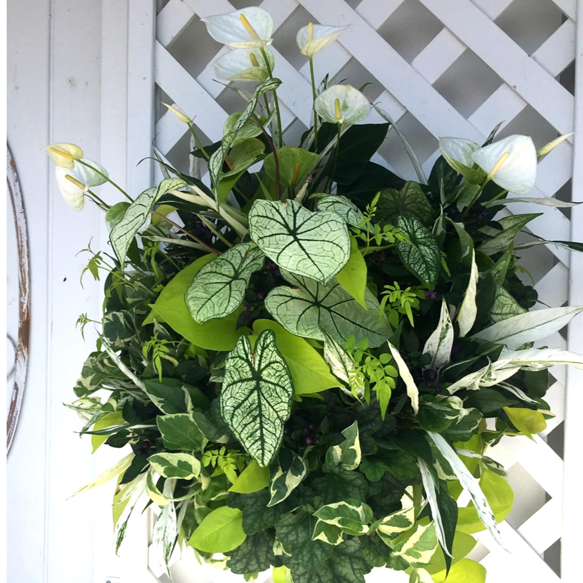 爽やかな観葉植物のウォールバスケット【オーダー】 - 画像1