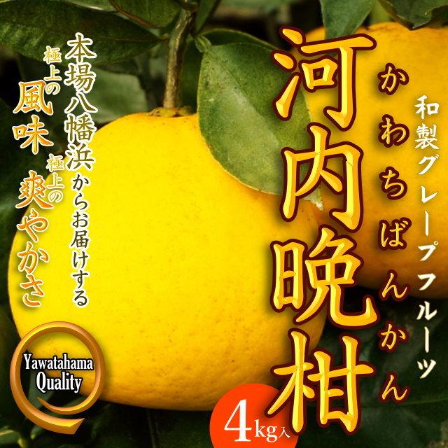 """""""和製グレープフルーツ"""" 極上の爽やかさ「河内晩柑」4kg入"""