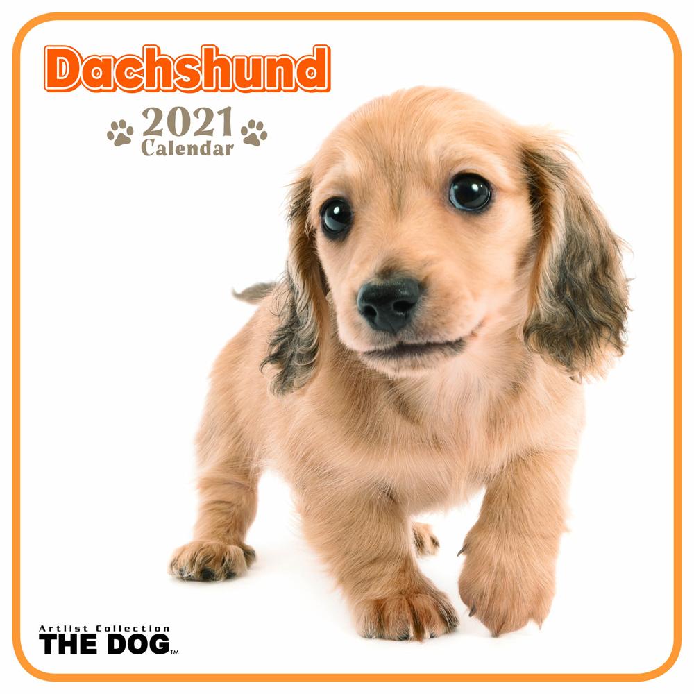 2021年 THE DOGミニカレンダー【ミニサイズ】 ダックスフンド(ミニ)