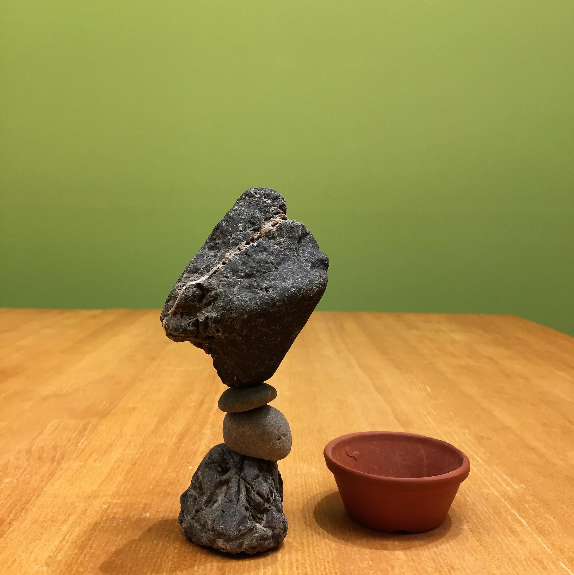 石花入門キット No.507