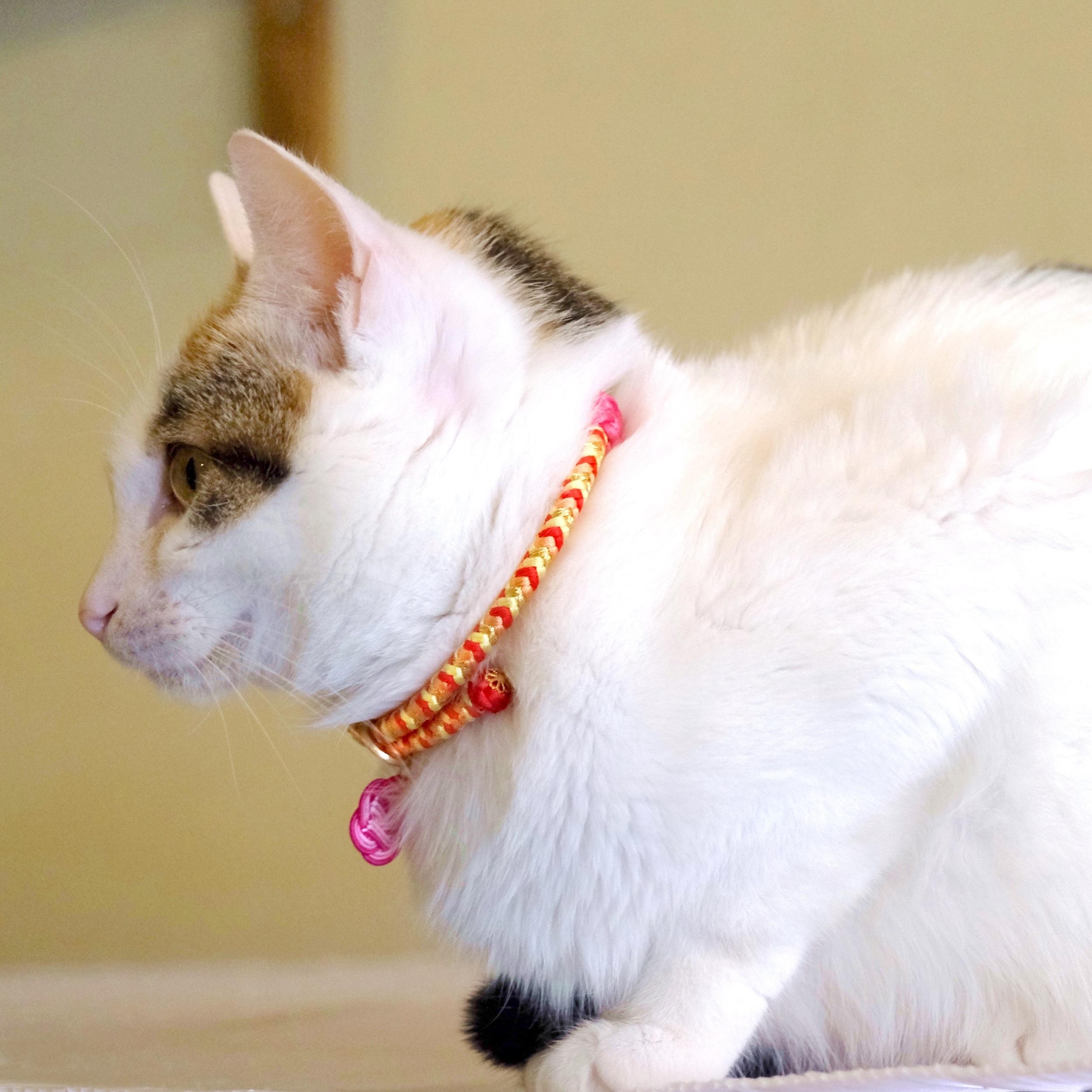 【猫首輪】Pink Lady ピンクレディ