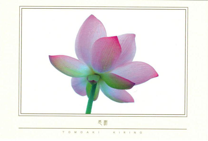 ポストカード 美しい日本の風景「感謝」(8枚入り)