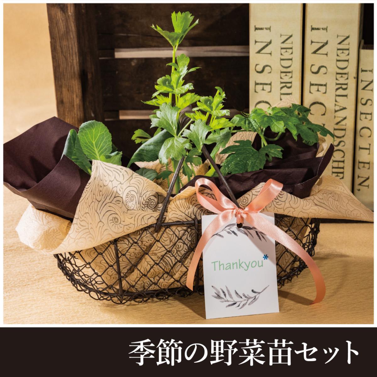 【敬老の日限定販売】季節の野菜苗セット