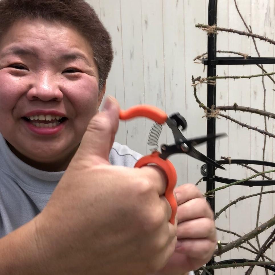 つるバラの剪定誘引に便利な両手が使える収穫鋏 - 画像3