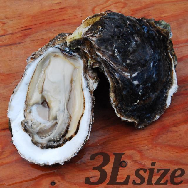 【朝どれ直送】養殖岩牡蠣3Lサイズ2個入 加熱用