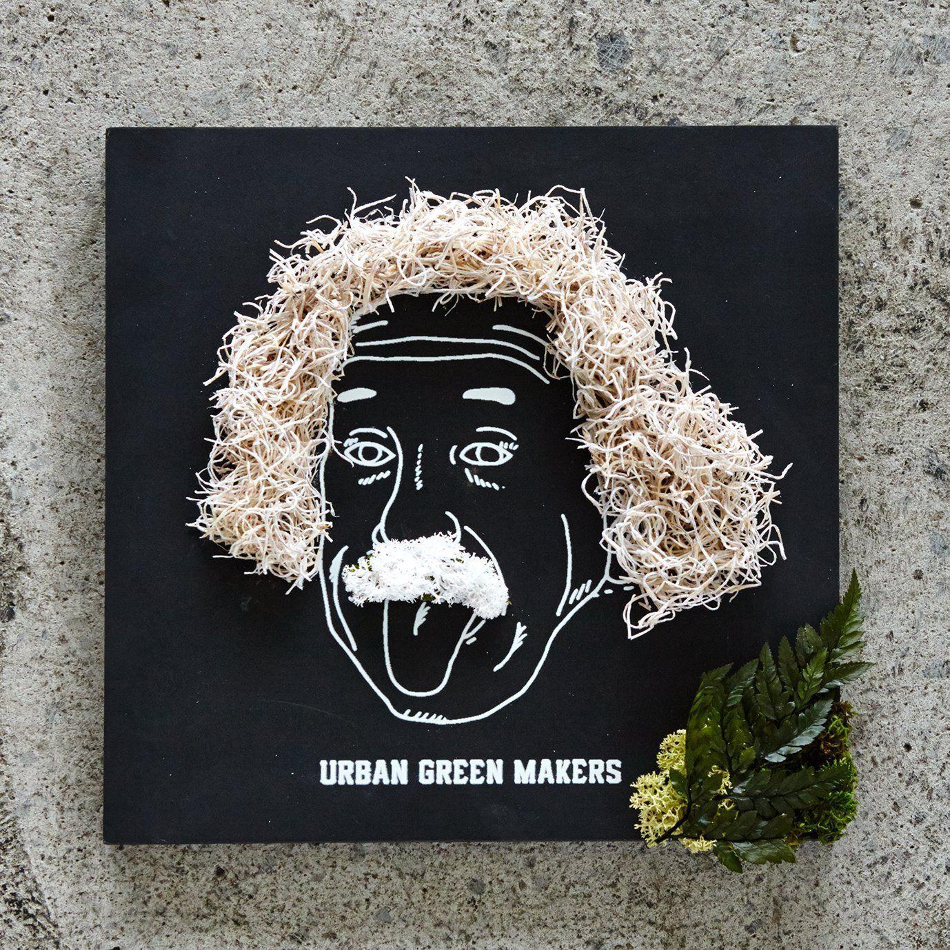 URBAN GREEN MAKERS(アーバングリーンメーカーズ)GREEN ART KIT グリーンアートキット(02 EINSTEIN)