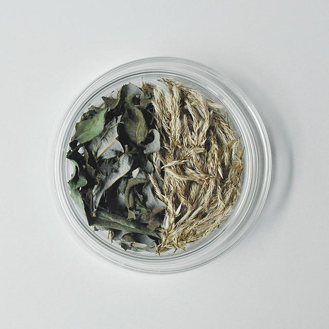 ケイトウとグミの葉のペトリ皿
