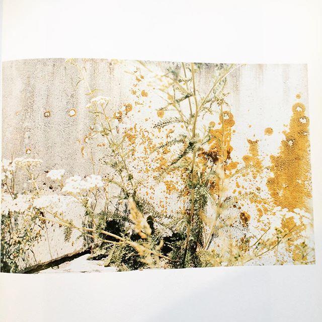 写真集「Nurnberg/Juergen Teller」 - 画像2