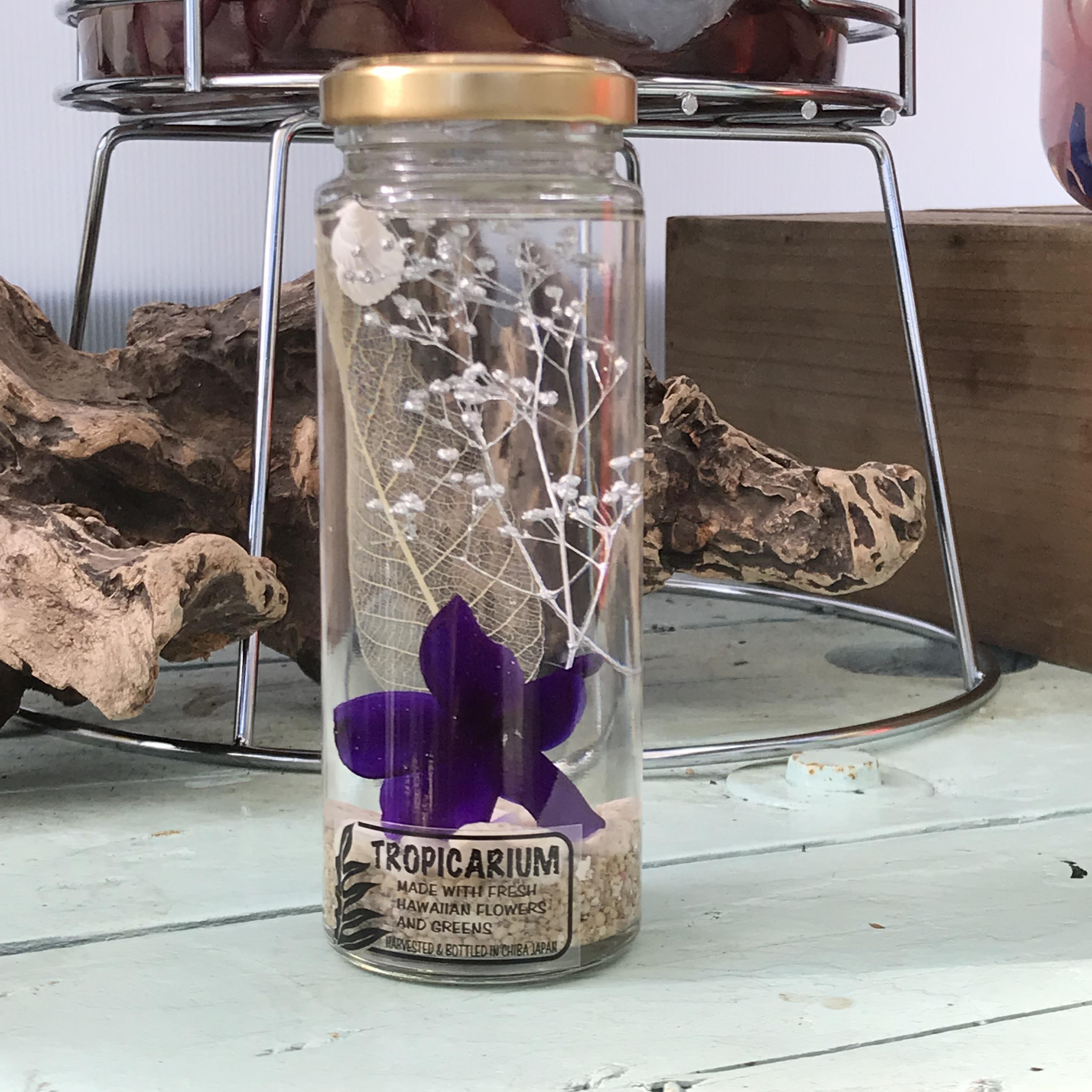 【ハワイアンなハーバリウム】プルメリアのトロピカリウム|ミッドナイトパープル(スリムボトル・プリザーブド)