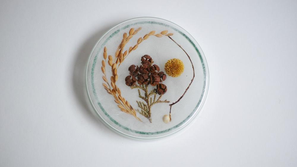 植物パーツセットno.01/dry flower set(シャーレ付)