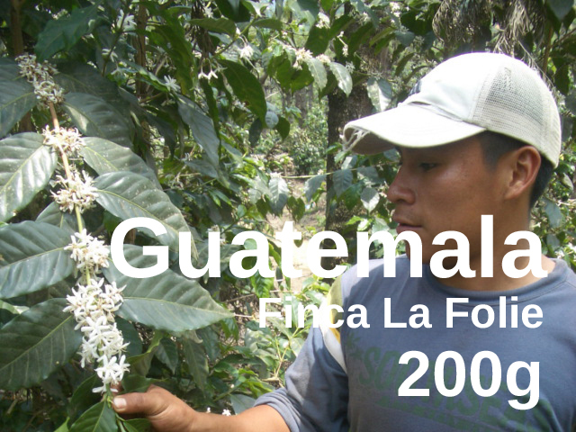 Guatemala | Antigua Finca La Folie  | コーヒー豆 200g