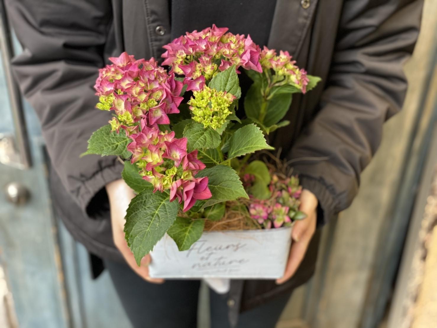 【母の日ギフト】ピンク紫陽花と桜吹雪