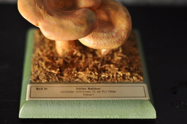 キノコ標本模型(Echfer Reizker)