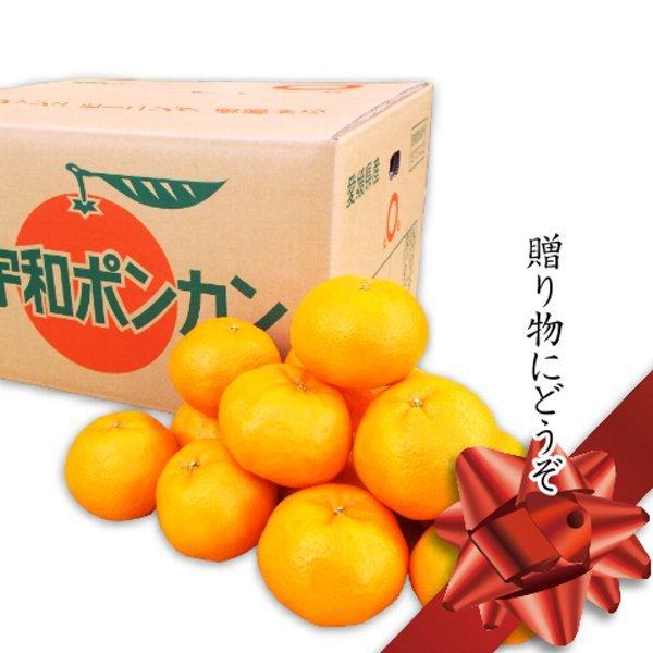 八協ポンカン10kg箱 秀品2LまたはLサイズ 愛媛西宇和産★送料無料 - 画像1