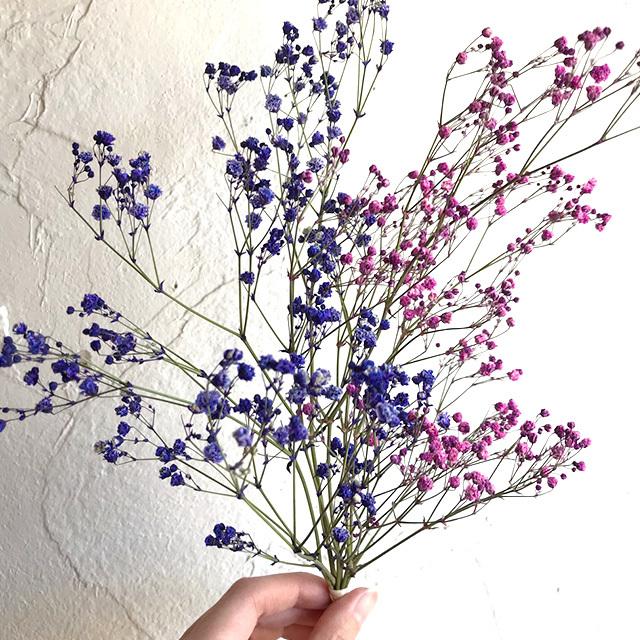 [花材] 染めカスミ2色セット