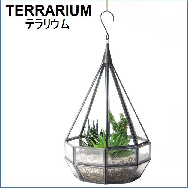 テラリウム用吊り型ガラスケース L【予約】