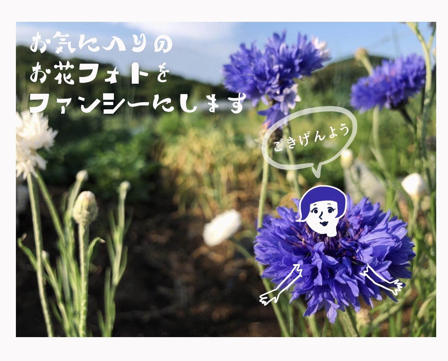 あなたのお気に入りのお花フォトをファンシーにします