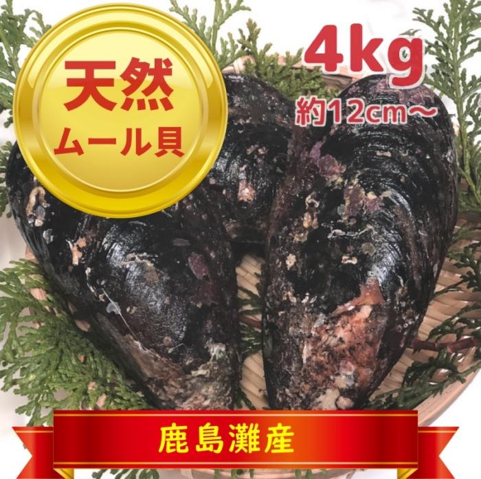 天然ムール貝4kg(鹿島灘産)【季節限定:おおよそ10月~3月まで】
