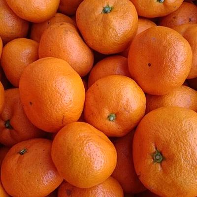 [季節限定] 小田原産 低農薬みかん 4kg