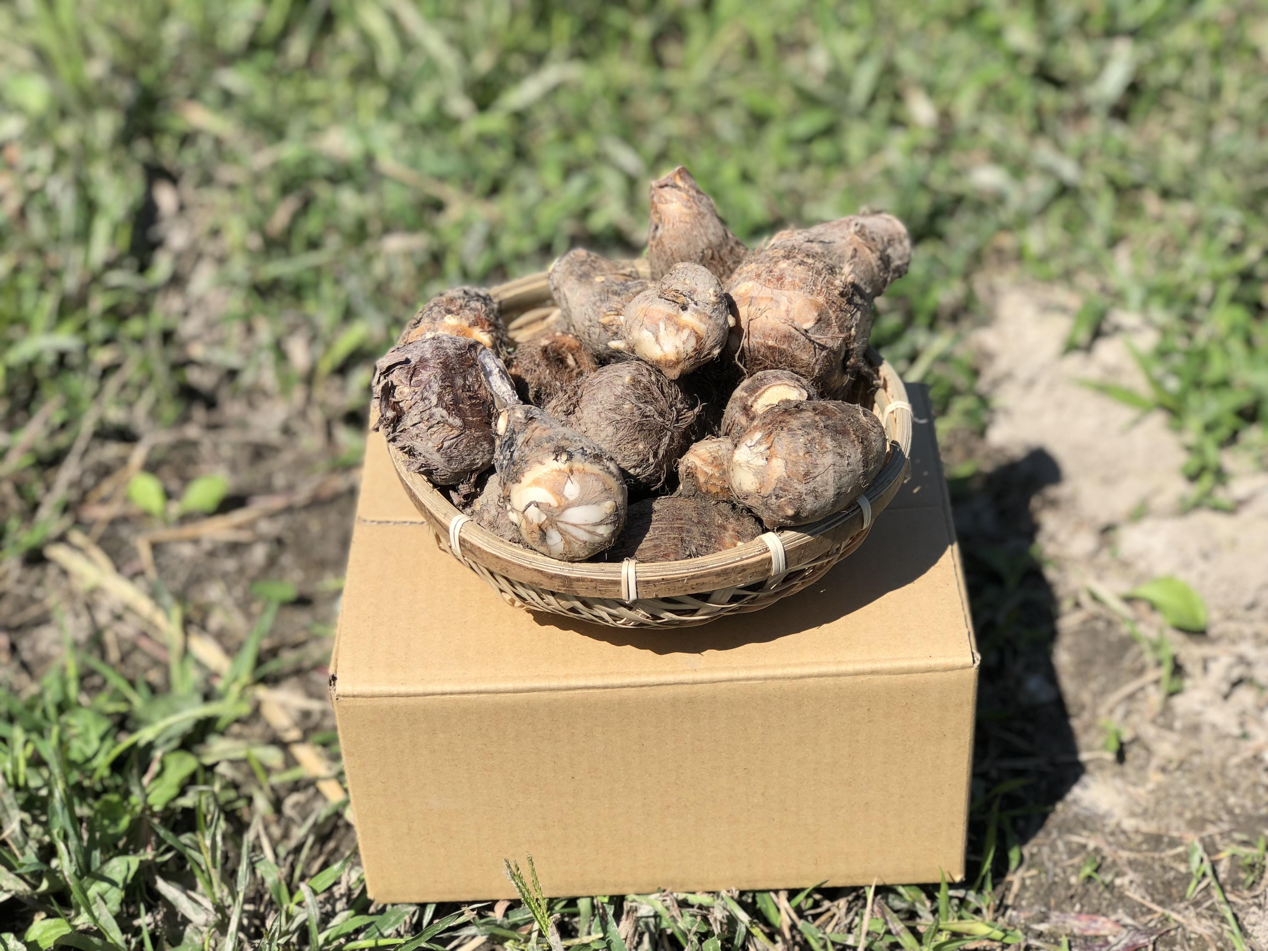1kg  松山の自然で育ったしっとり美味しい里芋