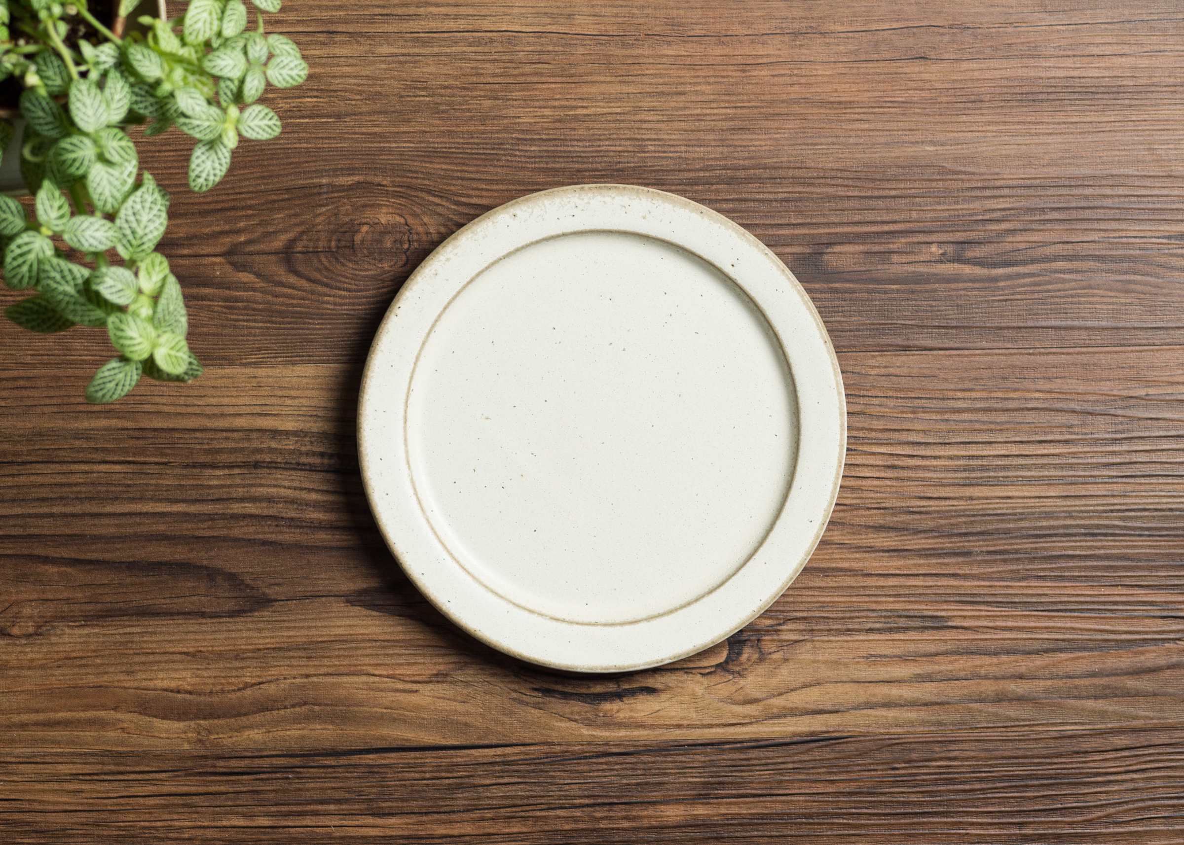 SHIROUMA 洋皿 18cm 白 中皿 プレート/長谷川 哲也