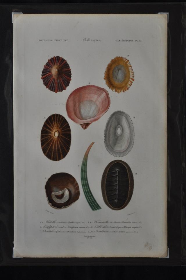 図版6(貝類4)