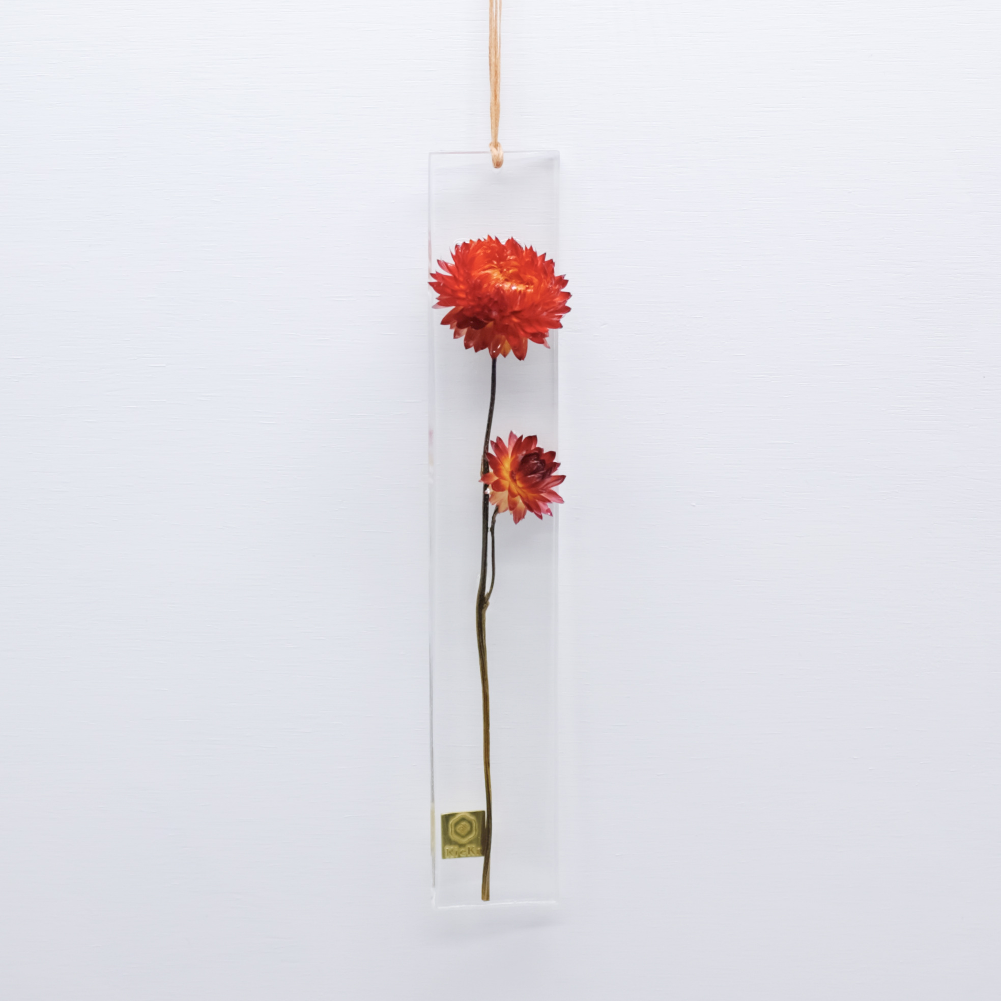 dried flower S ヘリクリサム レッド