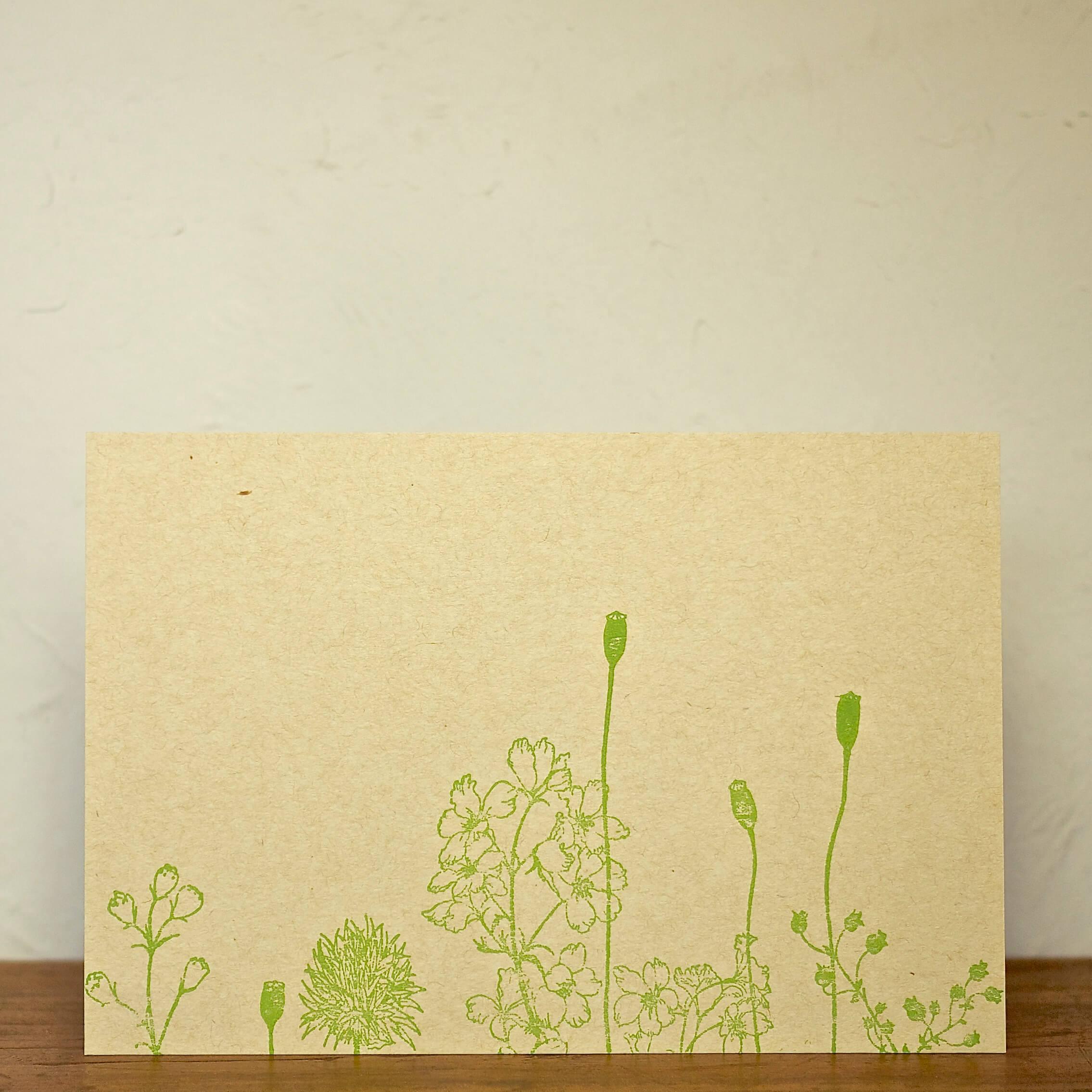 postcard 夏の庭 デルフィニウム