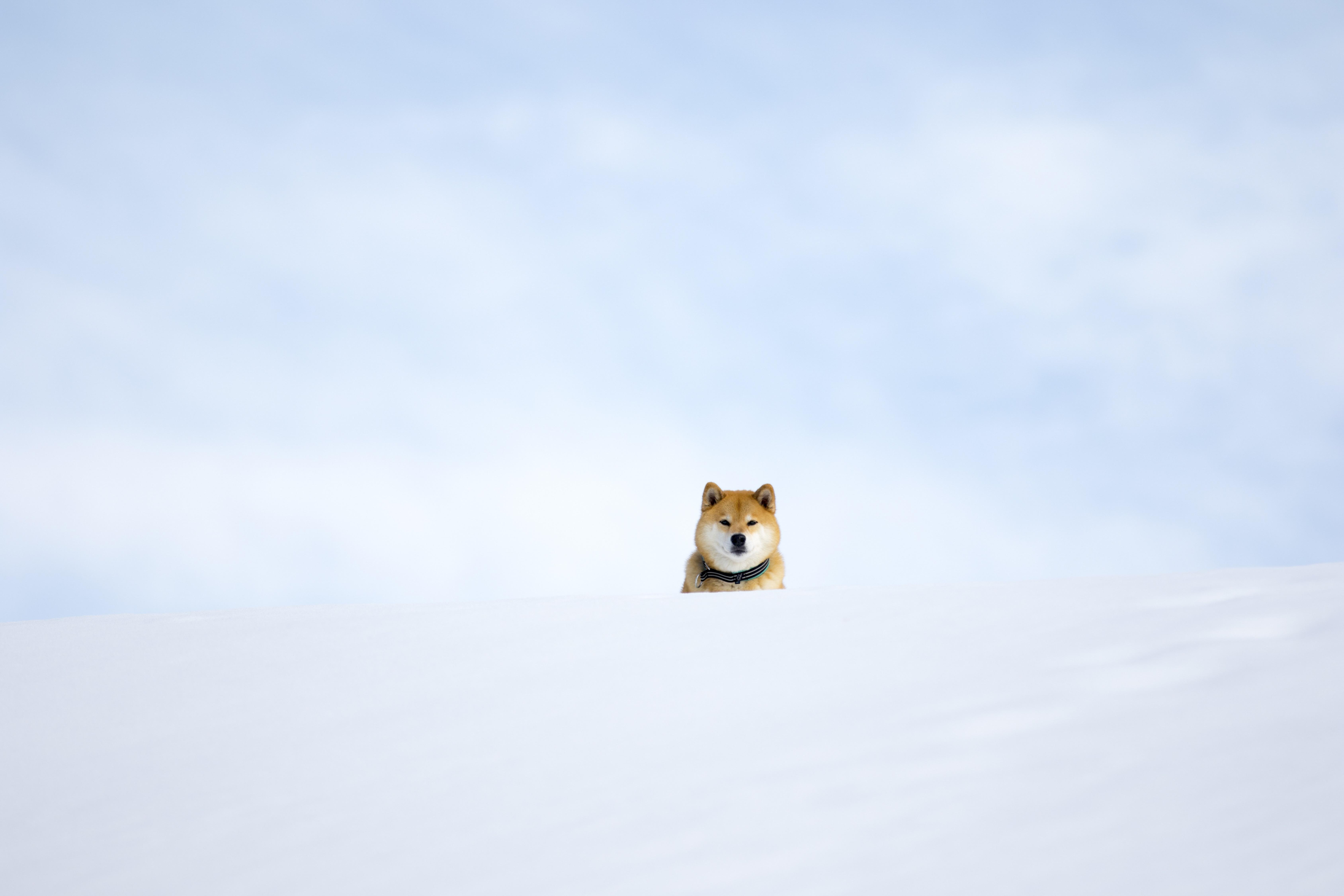 A3ノビ写真 「まる雲の中?」