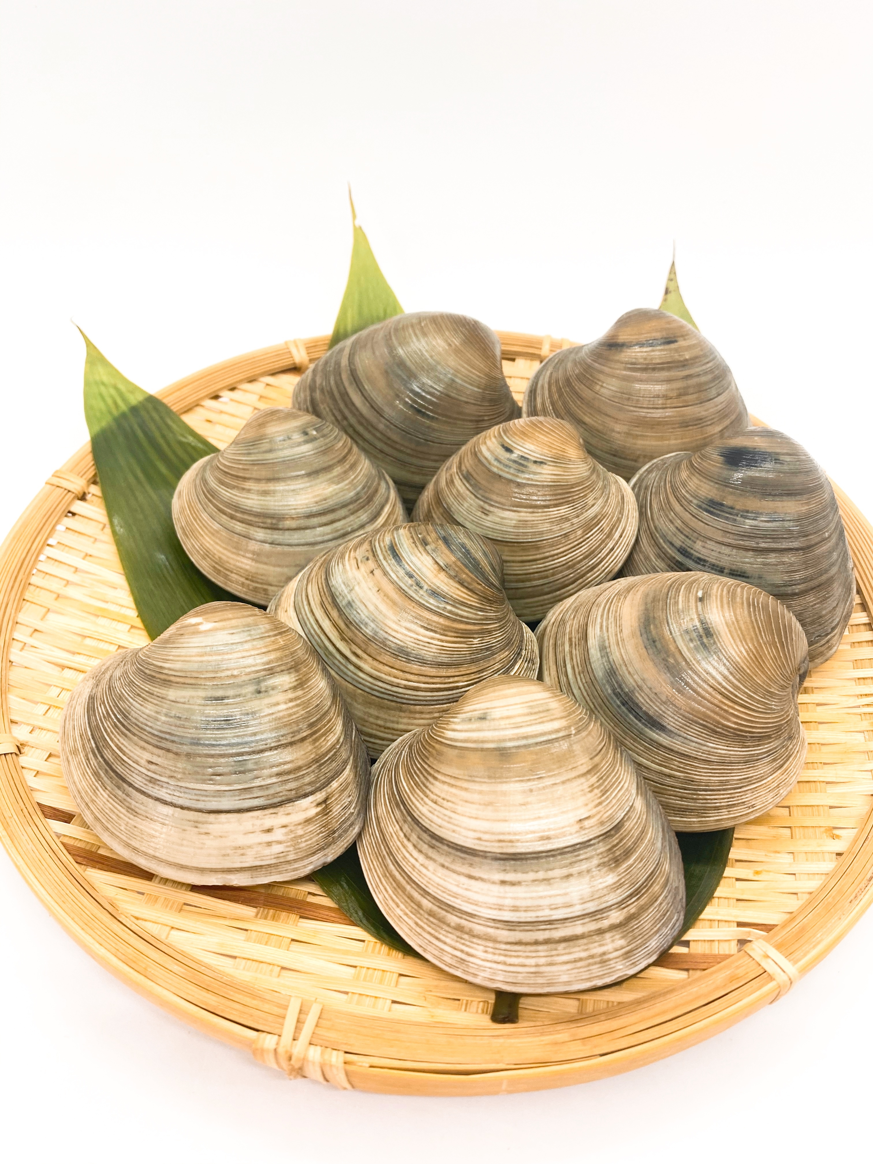 千葉県産 活ホンビノス貝 SサイズMサイズ混じり 約10kg入り