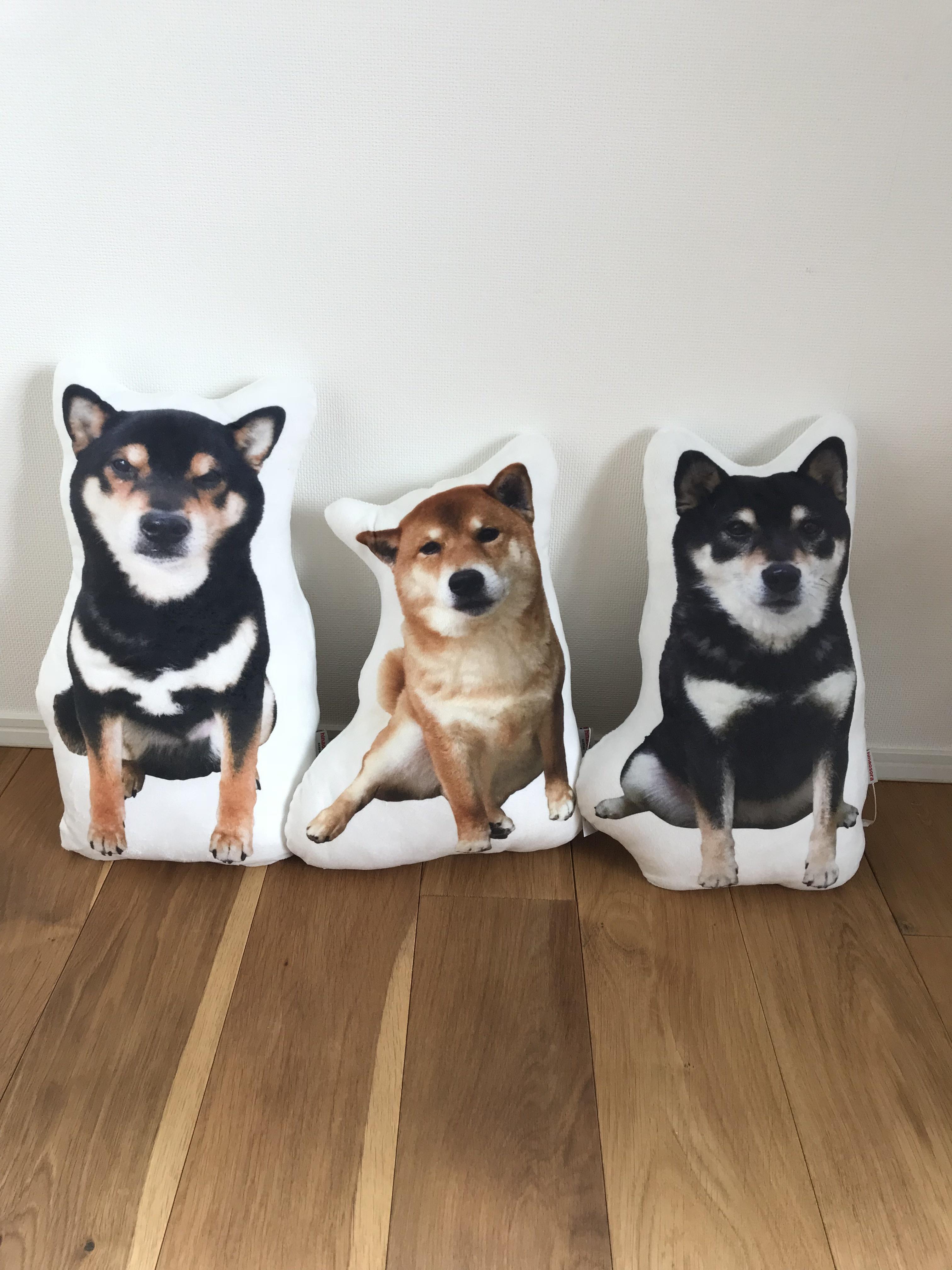 hinaosora  お座り!耳付きクッション 3兄弟セット!