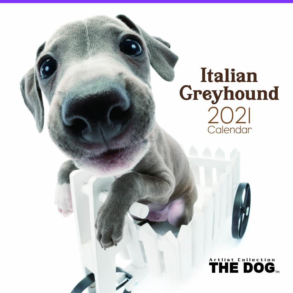 2021年 THE DOGカレンダー【大判サイズ】イタリアン・グレイハウンド