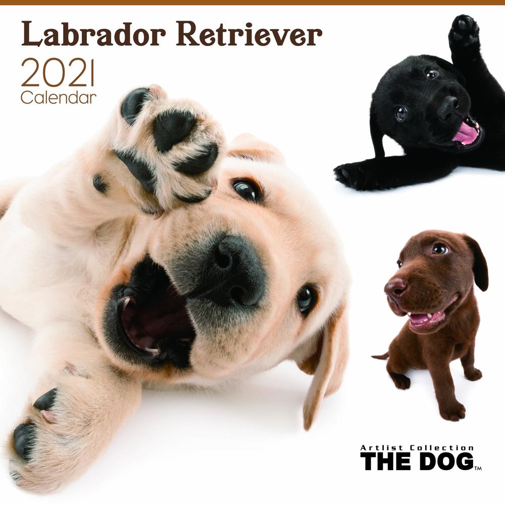 2021年 THE DOGカレンダー【大判サイズ】ラブラドール・レトリーバー