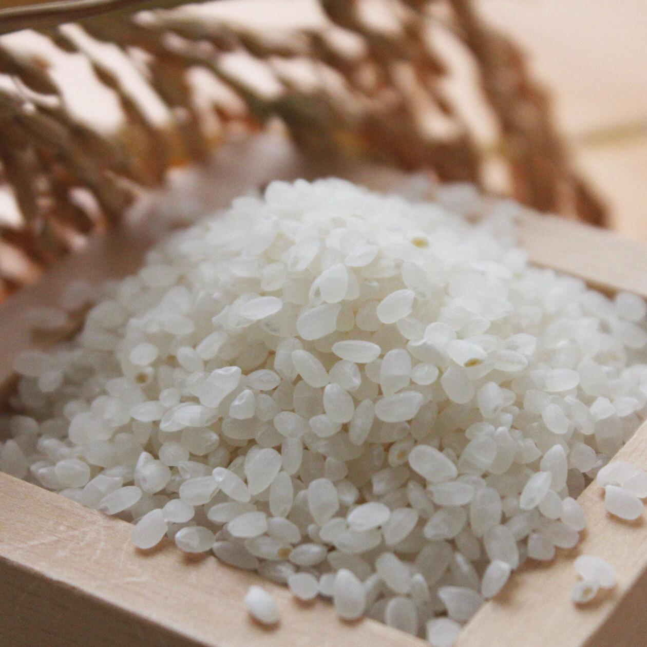 美し米 美山産コシヒカリ1 kg 精米