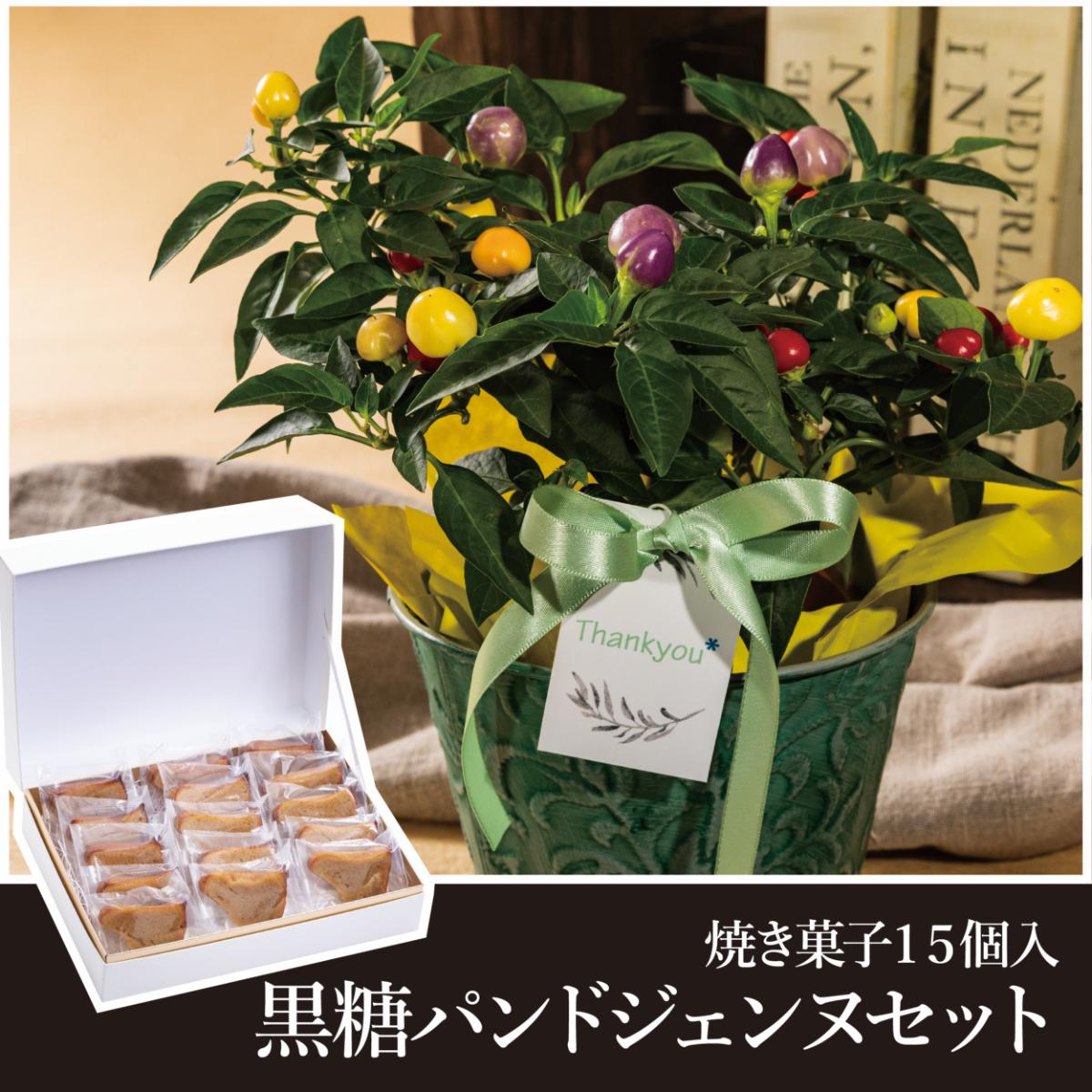【敬老の日限定販売】とうがらし+黒糖パンドジェンヌプティ15個入
