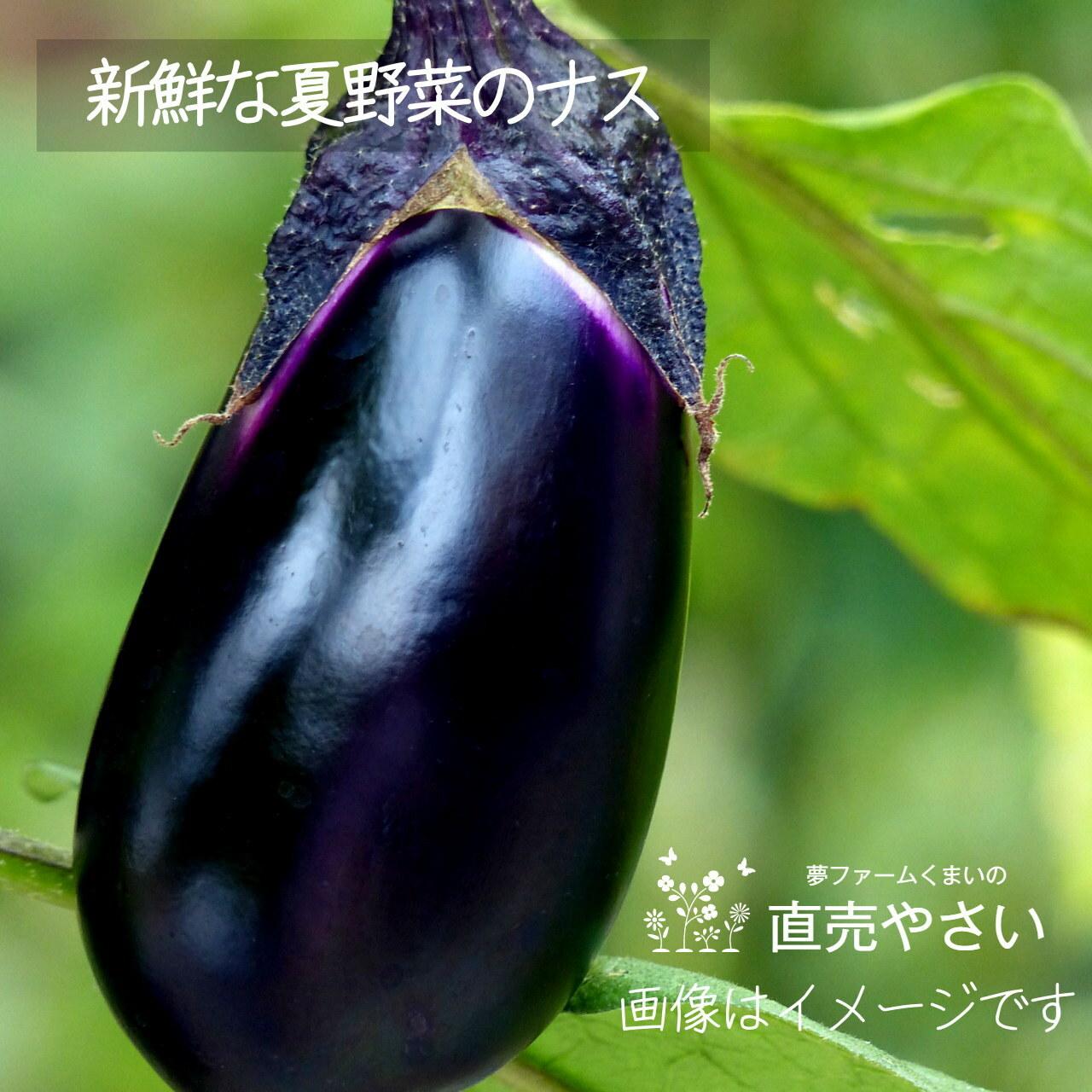 8月の新鮮な夏野菜: ナス 約350g 朝採り直売野菜  8月15日発送予定