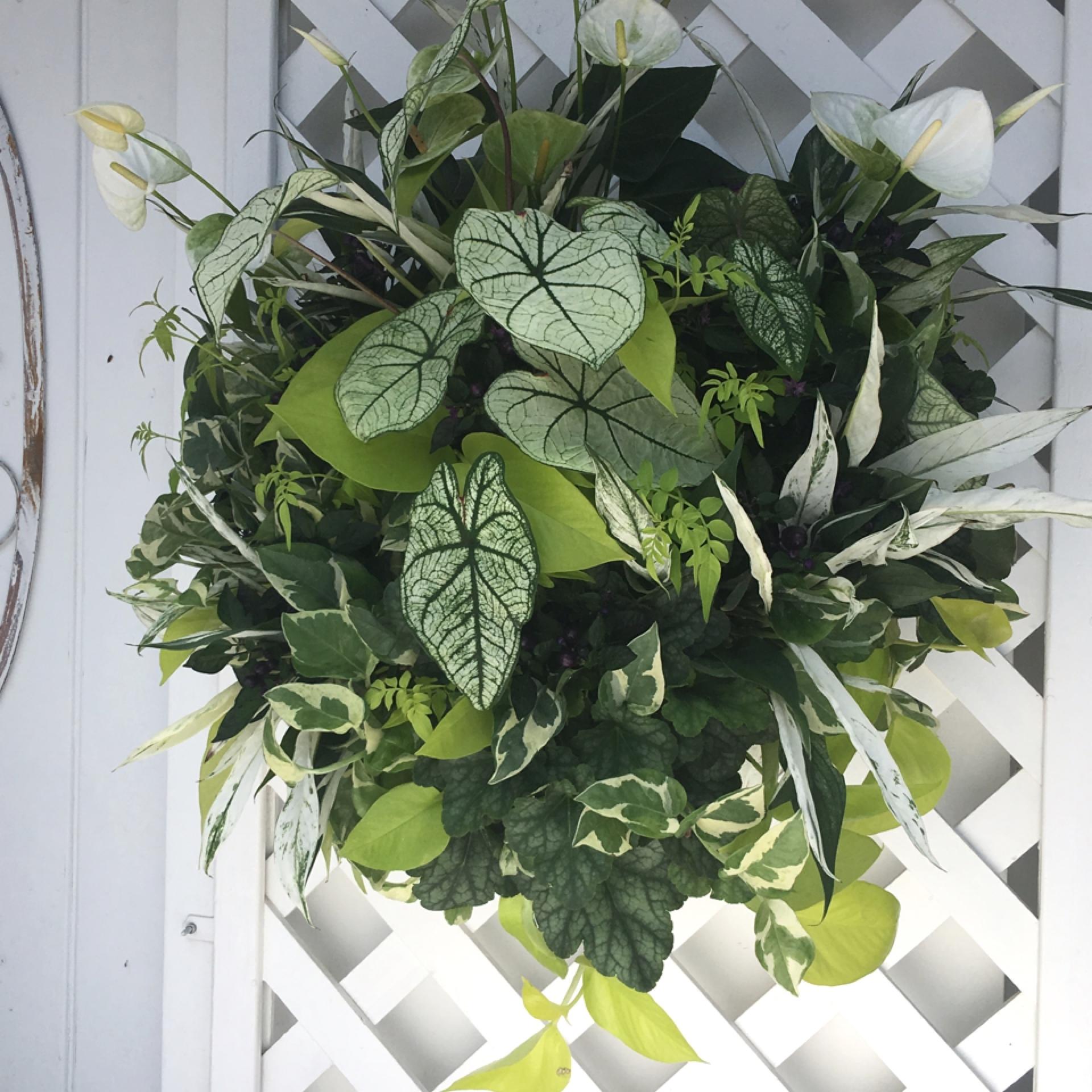 爽やかな観葉植物のウォールバスケット【オーダー】 - 画像2