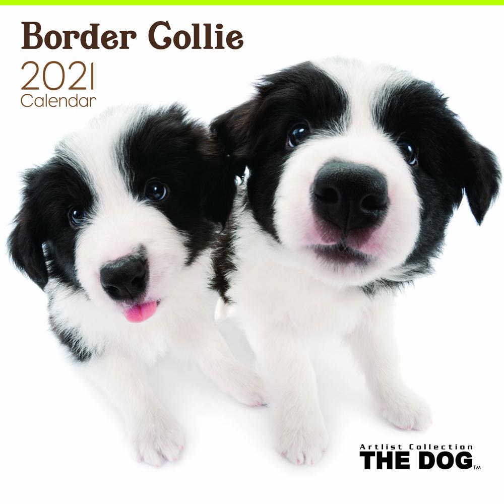 2021年 THE DOGカレンダー【大判サイズ】ボーダー・コリー