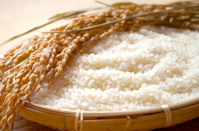 【長野米】 新米食べ比べ頒布会