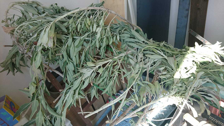 無農薬ホワイトセージ 浄化スプレー(ヒマラヤ水晶入り)  50ml パワーストーン、部屋の浄化におすすめ