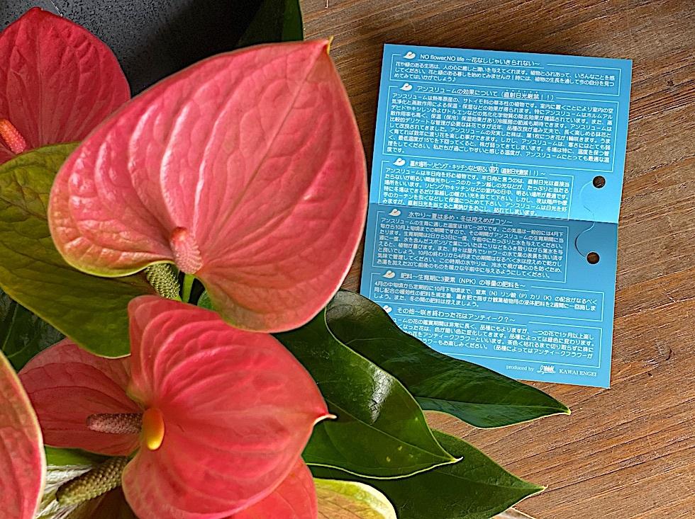 母の日 / トロピカル花鉢※完売(アンスリューム)